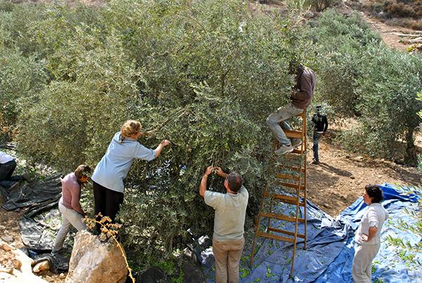 Olive+Harvest
