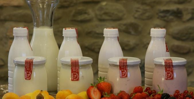 yogurt7494